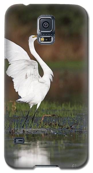 Egret Dancing Galaxy S5 Case by Bryan Keil