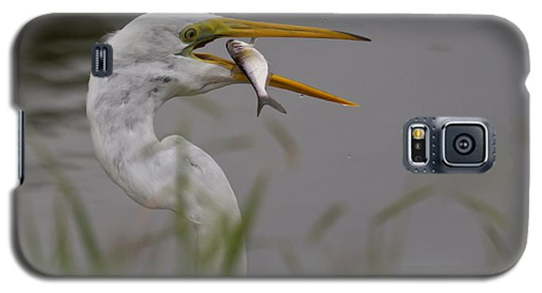 Galaxy S5 Case featuring the photograph Egret Having Lunch by Jerry Gammon
