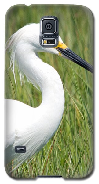 Galaxy S5 Case featuring the photograph Egret In The Sound by Greg Graham