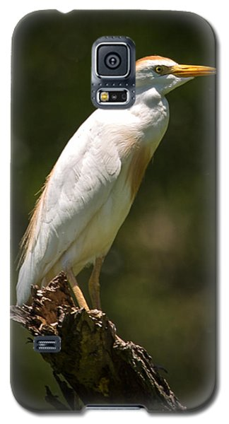 Cattle Egret Perched On Dead Branch Galaxy S5 Case