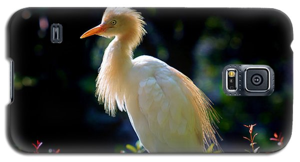 Egret With Back Lighting Galaxy S5 Case by Zoe Ferrie