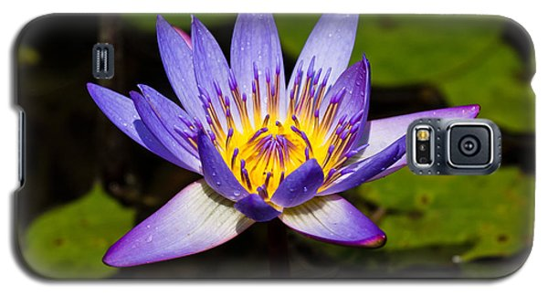 Egyptian Blue Water Lily  Galaxy S5 Case by Scott Carruthers