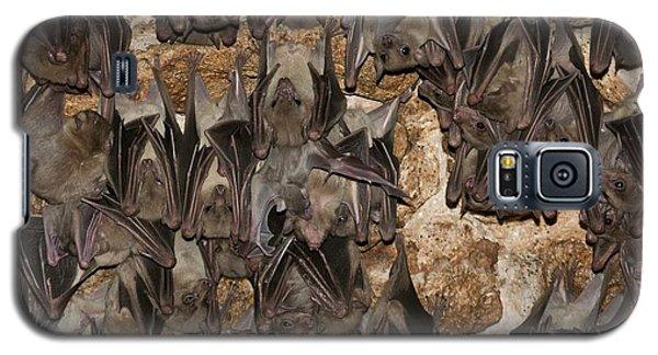 Egyptian Fruit Bat Rousettus Aegyptiacus Galaxy S5 Case by Photostock-israel