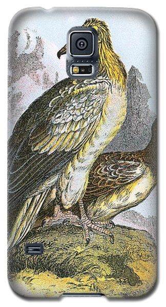 Egyptian Vulture Galaxy S5 Case by English School