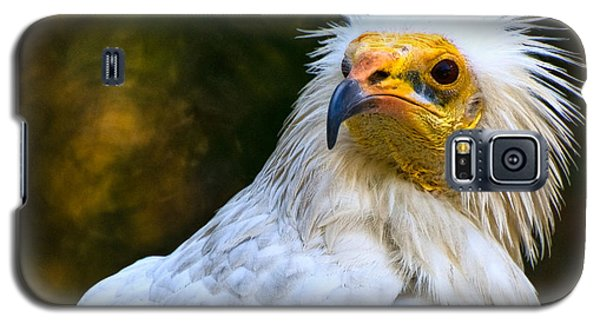 Egyptian Vulture Galaxy S5 Case