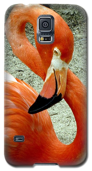 Figure Eight Flamingo Galaxy S5 Case