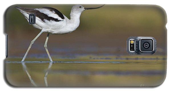 Elegant Avocet Galaxy S5 Case by Bryan Keil