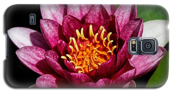 Elegant Lotus Water Lily Galaxy S5 Case by Denyse Duhaime