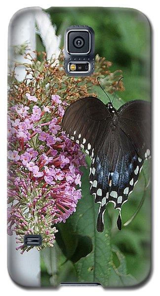 Elegant Swallowtail Butterfly Galaxy S5 Case by Margie Avellino