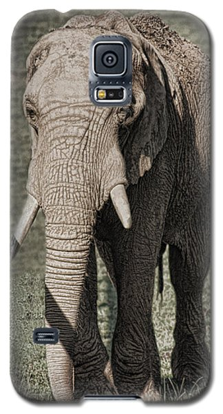 Galaxy S5 Case featuring the photograph Elephant by Angel Jesus De la Fuente
