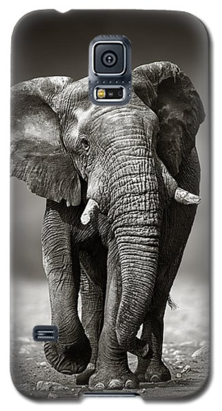 Bull Galaxy S5 Case - Elephant Approach From The Front by Johan Swanepoel