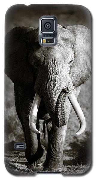 Wildlife Galaxy S5 Case - Elephant Bull by Johan Swanepoel