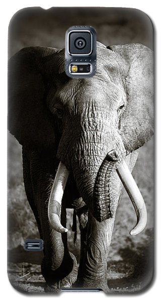 Elephant Bull Galaxy S5 Case
