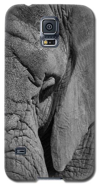 Elephant Bw Galaxy S5 Case