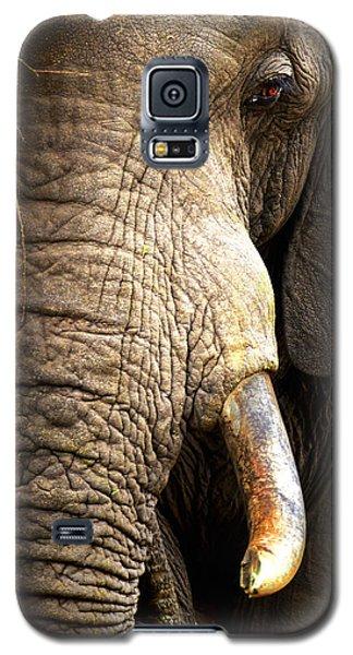 Elephant Close-up Portrait Galaxy S5 Case