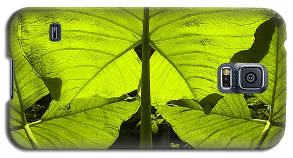 Elephant Ear Leaves In The Rainforest Galaxy S5 Case