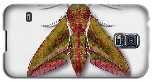 Elephant Hawk Moth Butterfly - Deilephila Elpenor Naturalistic Painting - Nettersheim Eifel Galaxy S5 Case