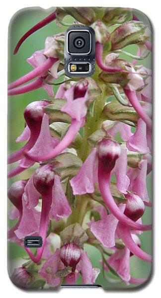 Elephant's Head Flowers Galaxy S5 Case