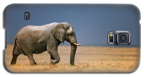 Elephant In Grassfield Galaxy S5 Case