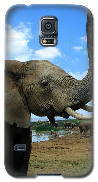 Elephant Posing Galaxy S5 Case