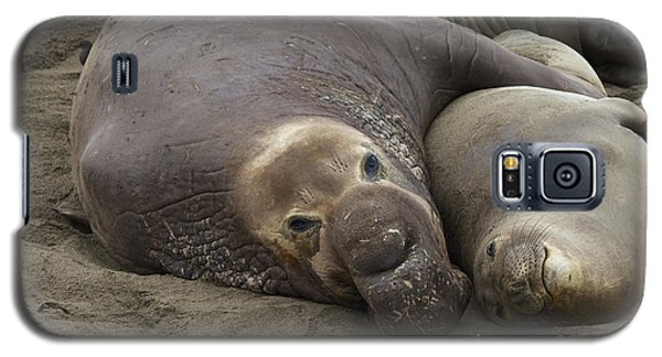 Galaxy S5 Case featuring the photograph Elephant Seal Couple by Duncan Selby