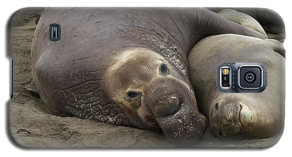 Elephant Seal Couple Galaxy S5 Case by Duncan Selby