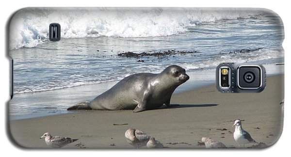 Galaxy S5 Case featuring the photograph Elephant Seal On Piedras Blancas Beach by Jan Cipolla