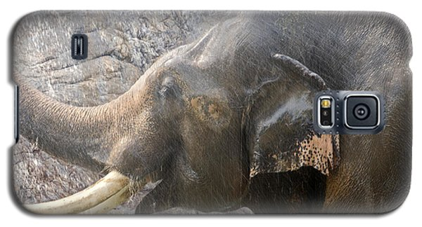 Elephant Shower Galaxy S5 Case