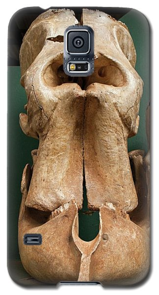Elephant Skull Cyclops Fossil Myth Galaxy S5 Case by Paul D Stewart