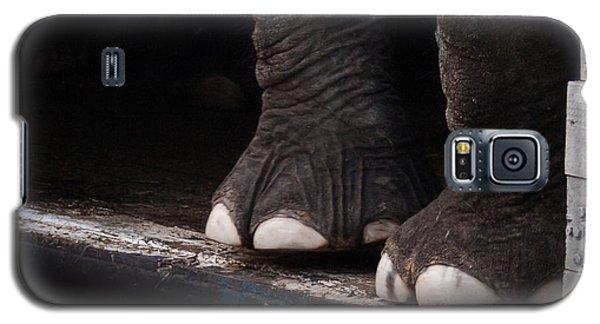Elephant Toes Galaxy S5 Case by Bob Orsillo