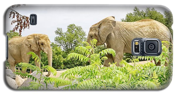 Elephants Thika And Toka At The Toronto Zoo Galaxy S5 Case