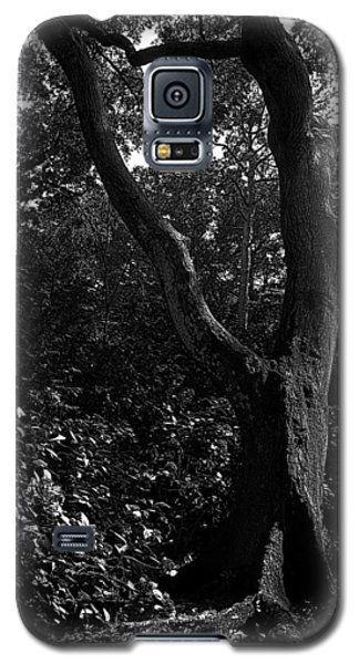 Galaxy S5 Case featuring the photograph Elizabethan Gardens Tree In B And W by Greg Reed