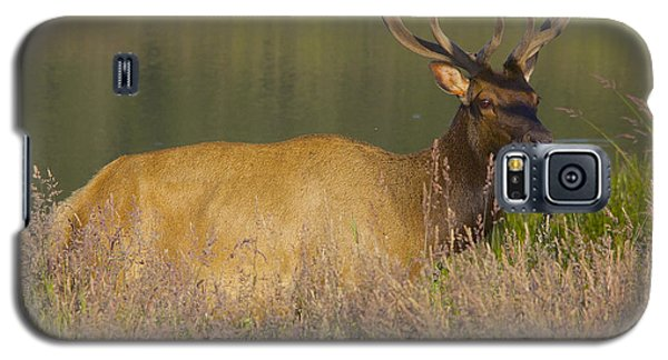 Galaxy S5 Case featuring the photograph Elk At Dusk by Todd Kreuter