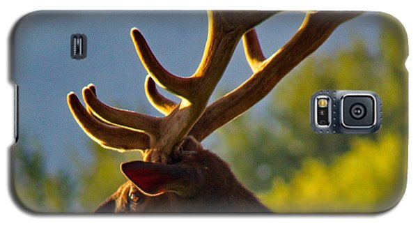 Elk At Sunset Galaxy S5 Case