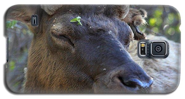 Elk Chuckle Galaxy S5 Case