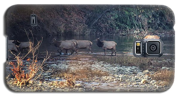 Elk Crossing The Buffalo River Galaxy S5 Case