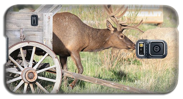 Elk Drawn Carriage Galaxy S5 Case