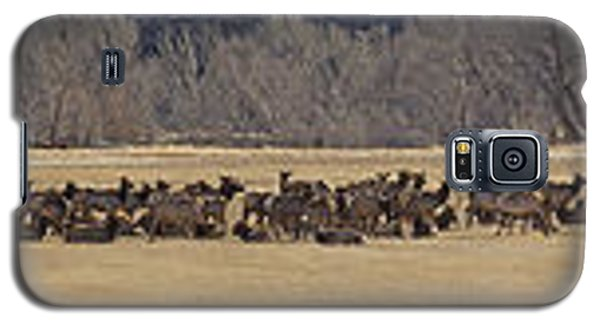 Galaxy S5 Case featuring the photograph Elk Herd And Horses Panorama 18x161 by J L Woody Wooden