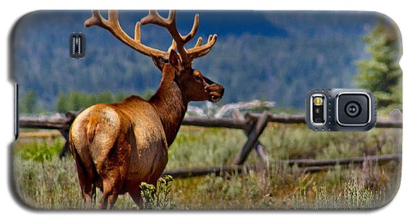 Elk In July Galaxy S5 Case