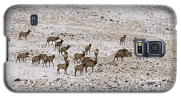 Galaxy S5 Case featuring the photograph Elk In Snow Panorama 14x47 by J L Woody Wooden