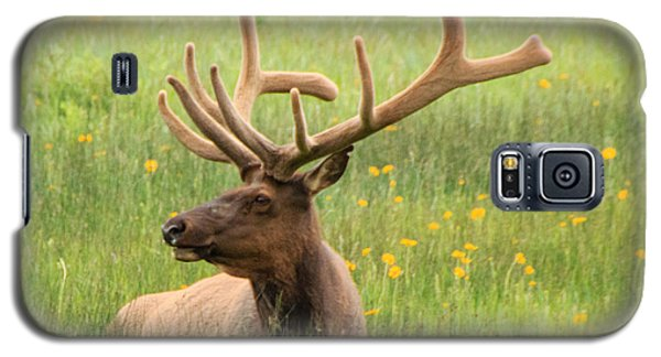 Galaxy S5 Case featuring the photograph Elk In The Flowers by Cathy Donohoue