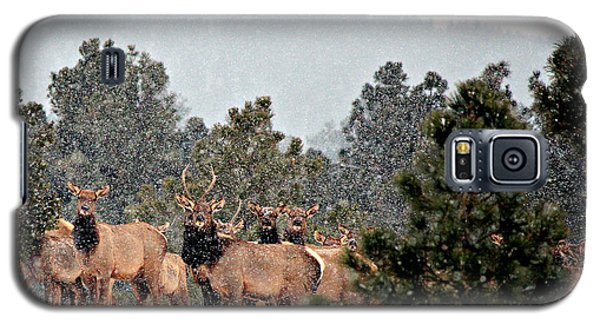 Galaxy S5 Case featuring the photograph Elk In The Snowing Open by Barbara Chichester