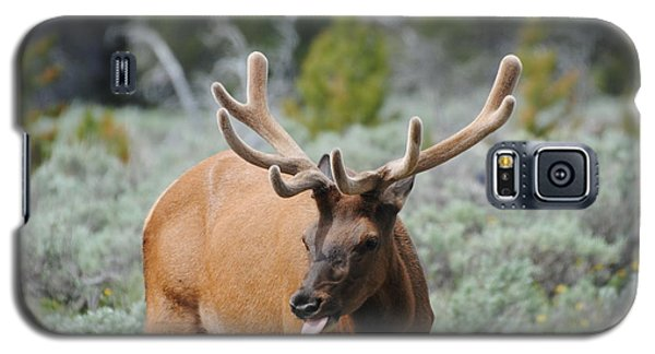 Elk Licking Lips Galaxy S5 Case