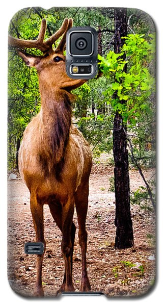 Galaxy S5 Case featuring the photograph Elk - Mather Grand Canyon by Bob and Nadine Johnston
