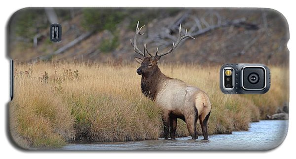 Galaxy S5 Case featuring the photograph Elk On The Madison by Daniel Behm