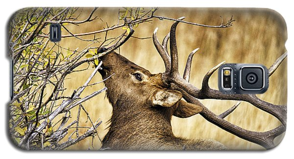 Elk Portrait Galaxy S5 Case