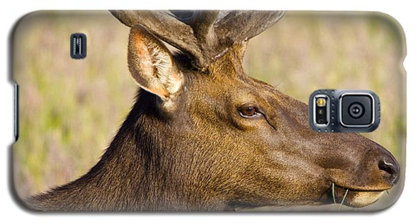 Galaxy S5 Case featuring the photograph Elk Profile by Todd Kreuter