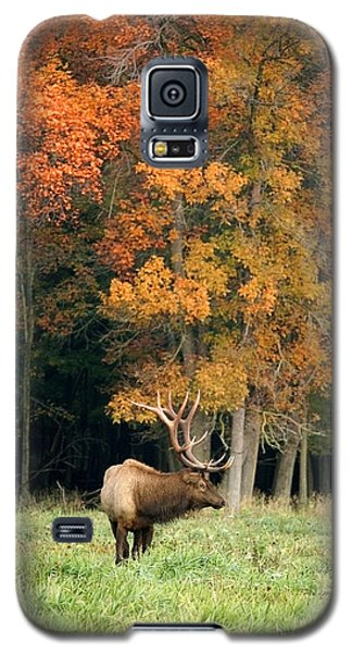 Elk With Autumn Colors Galaxy S5 Case