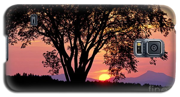 Elm At Sunset Galaxy S5 Case by Alan L Graham