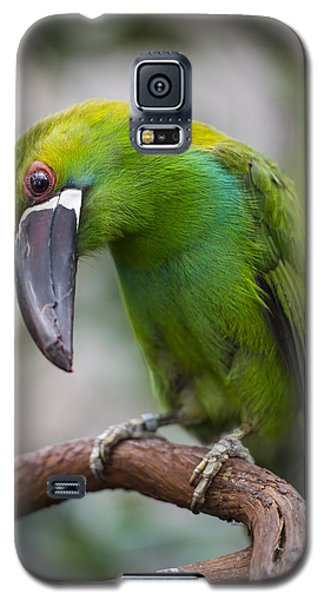 Emerald Toucanet Galaxy S5 Case by Phil Abrams